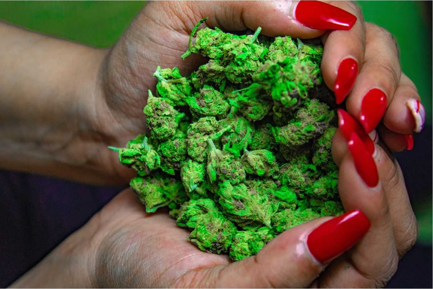 Cannabis In Hands